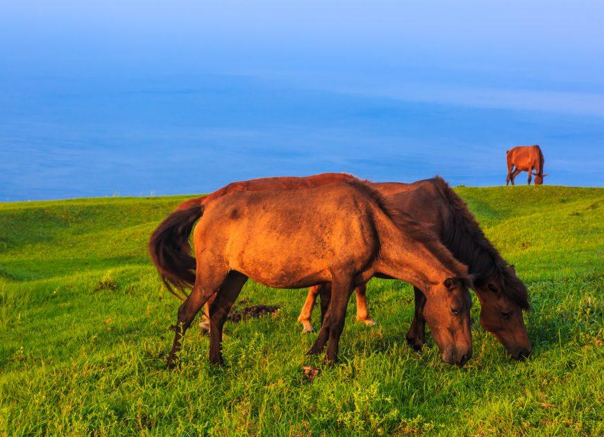 馬プラセンタは何がいいの?注目すべきは美肌効果の高さ